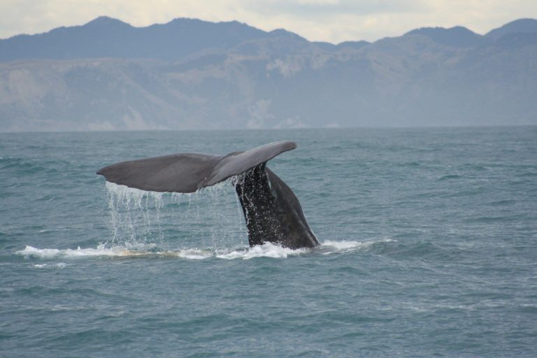 whale-tail-2-1399931 (1)